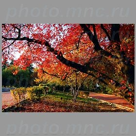 Горы мгу темы осень воробьевы горы мгу